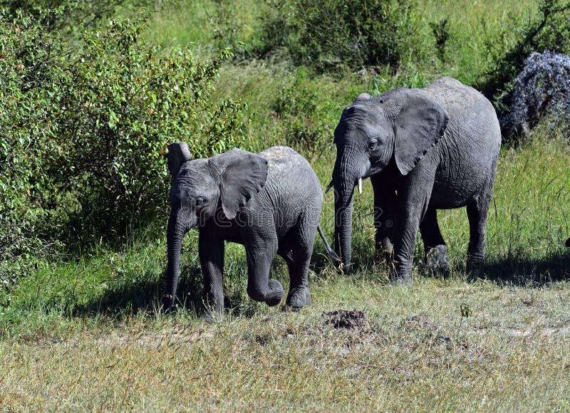 Download Elefante foto de archivo. Imagen de fauna, áfrica, yermo - 44851460