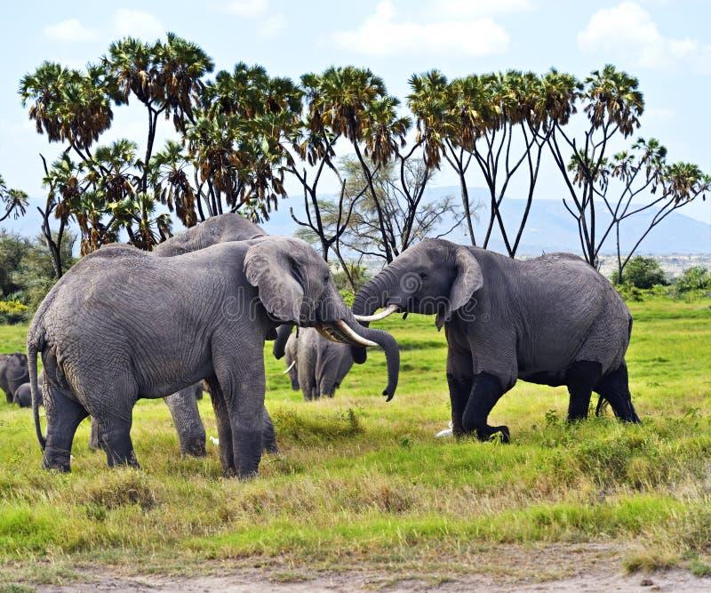 Download Elefante imagen de archivo. Imagen de sabana, paisaje - 44851513