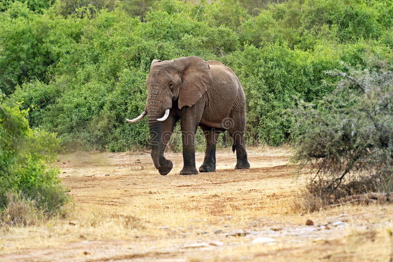 Download Elefante imagen de archivo. Imagen de temas, símbolo - 44851625