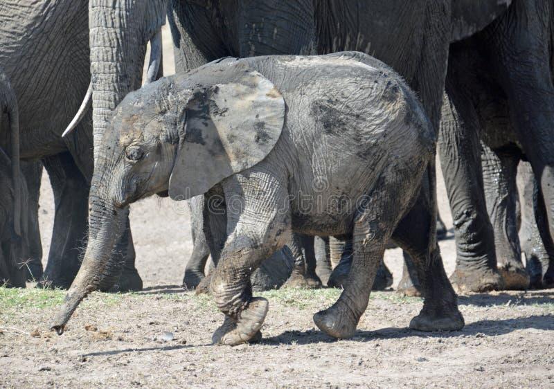 Elefante foto de stock royalty free