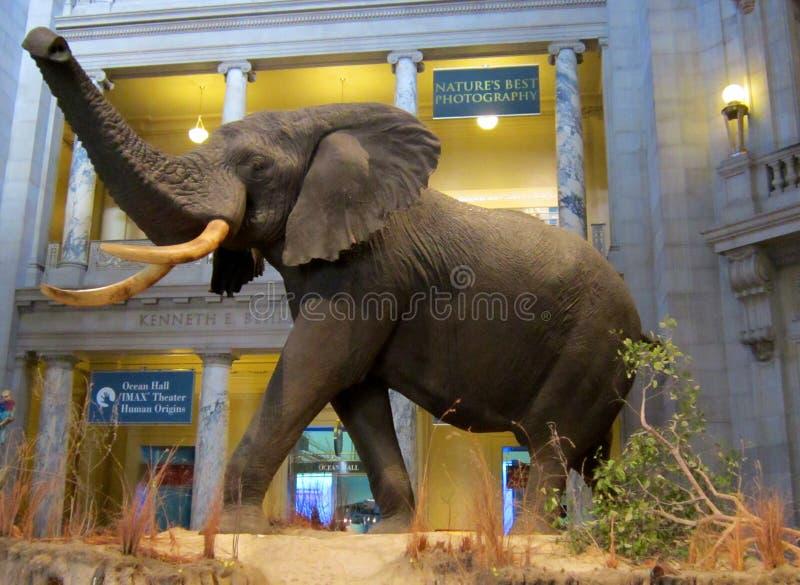 Elefante fotos de stock