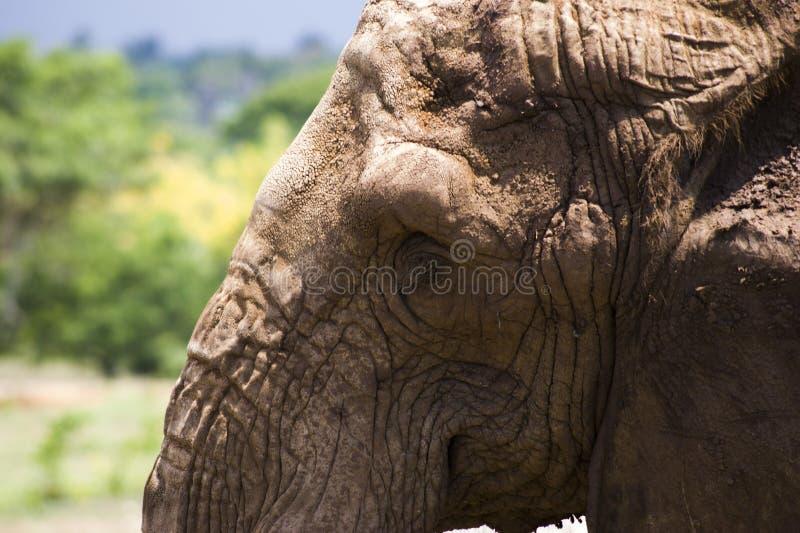 Elefante imagen de archivo