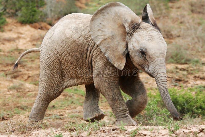 Download Elefante africano del bebé imagen de archivo. Imagen de verdadero - 7282017