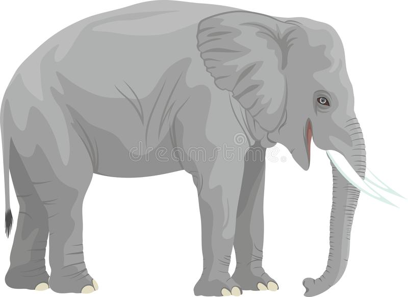 Elefante africano del vector aislado en blanco stock de ilustración