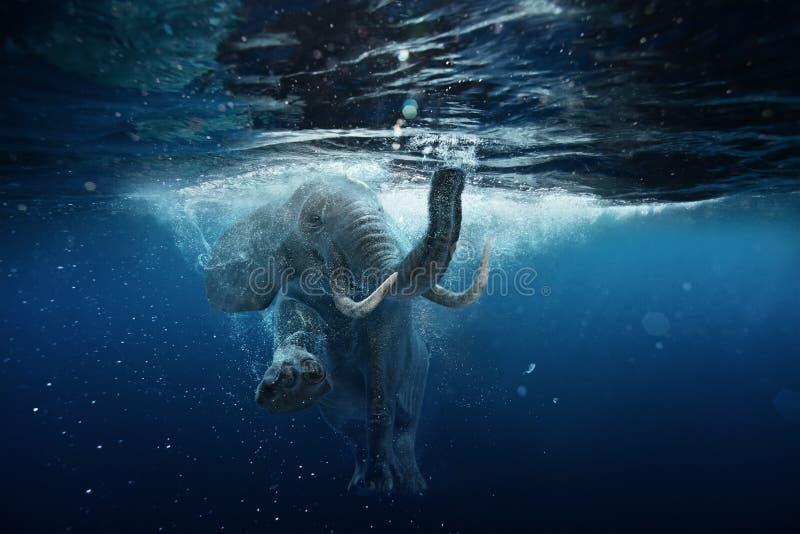 Elefante africano subacuático en agua azul del océano imagen de archivo