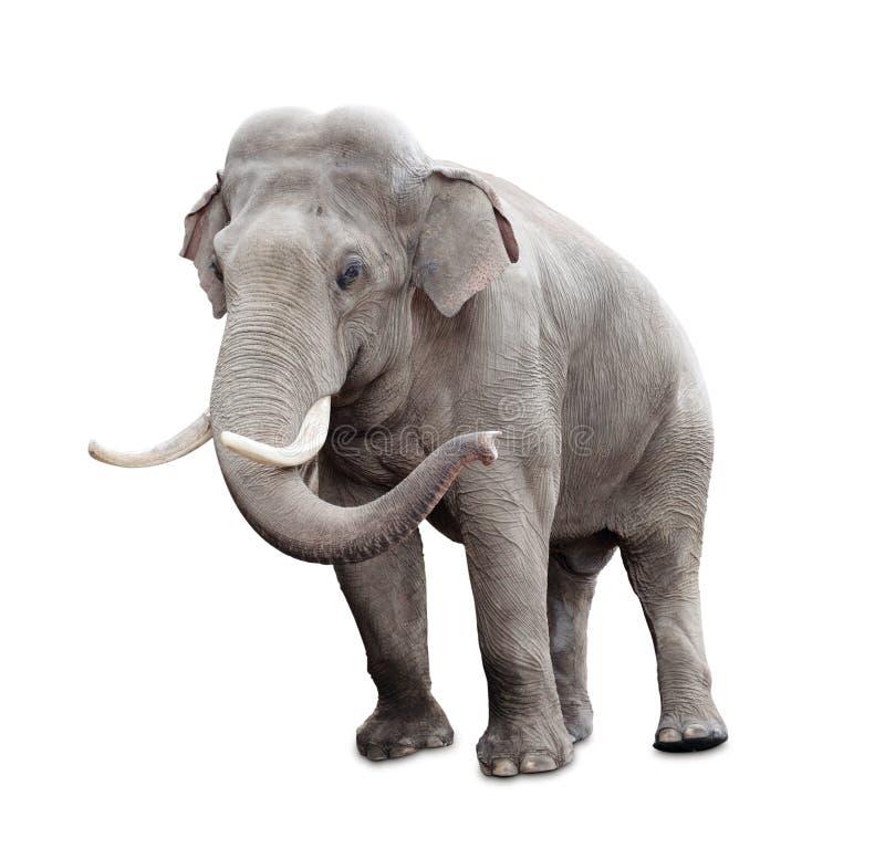 Elefante aislado en blanco con el camino de recortes foto de archivo libre de regalías