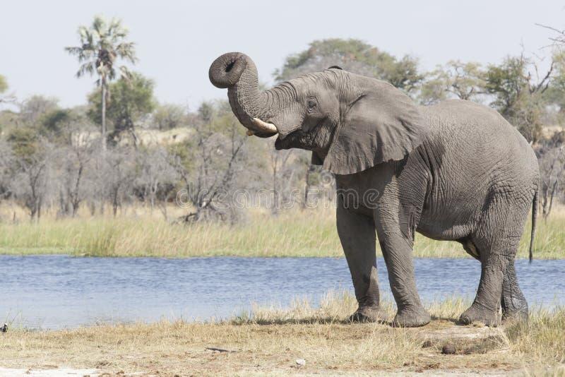 Elefante al fiume fotografia stock libera da diritti