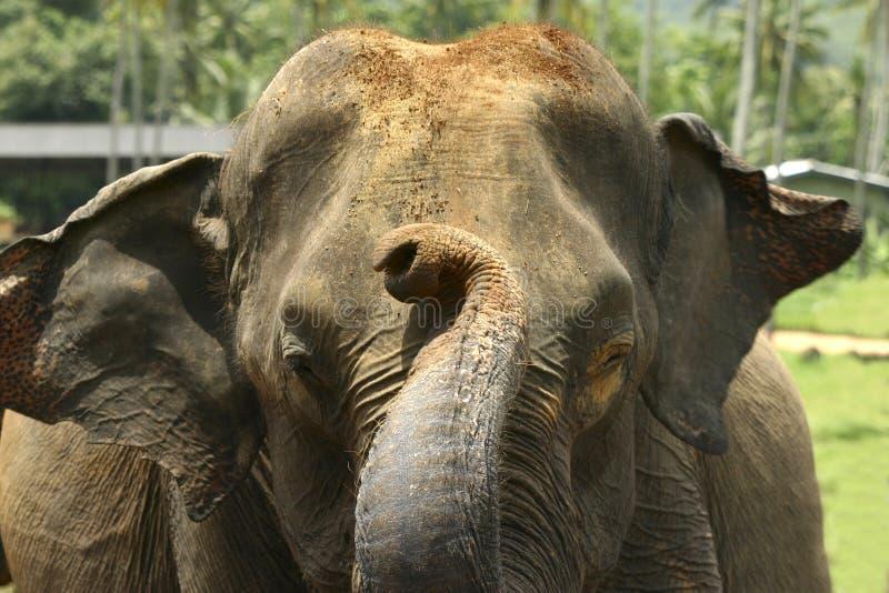 Elefante all'orfanotrofio fotografia stock libera da diritti