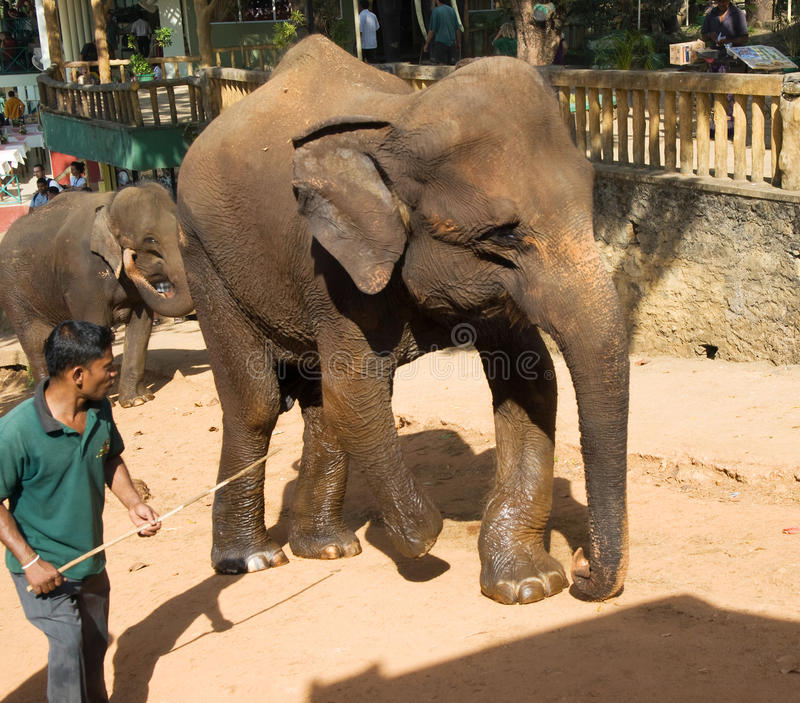 Elefante andicappato danneggiato nella guerra immagini stock libere da diritti