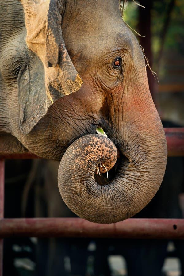 Elefante asiático del bebé fotos de archivo libres de regalías