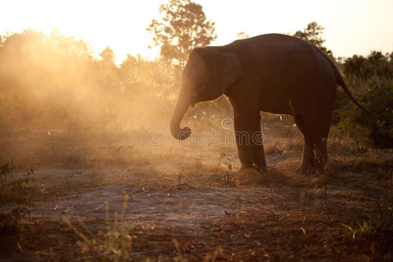 Elefante asiático del bebé en la puesta del sol imagenes de archivo