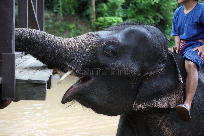 Elefante asiático lindo del bebé imagen de archivo