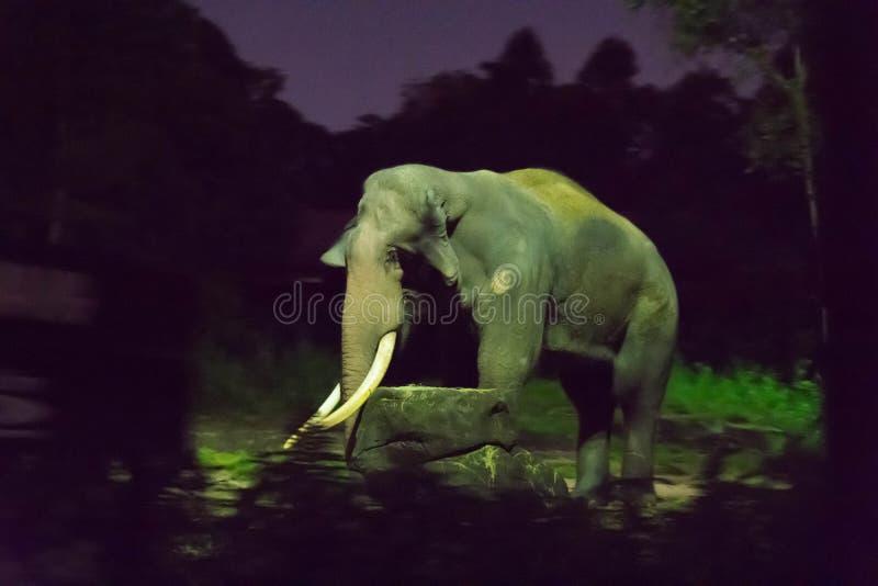 Elefante asiático na parte escura da floresta durante a noite safar fotos de stock