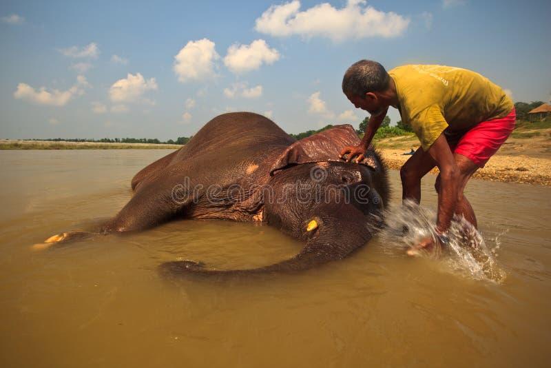 Elefante asiático que está sendo lavado no rio em Nepal imagens de stock royalty free