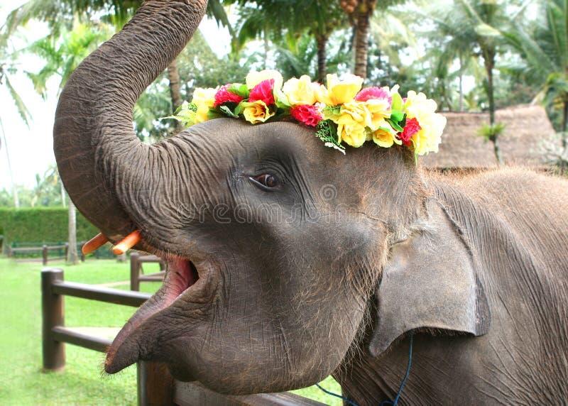 Elefante asiatico del bambino immagini stock