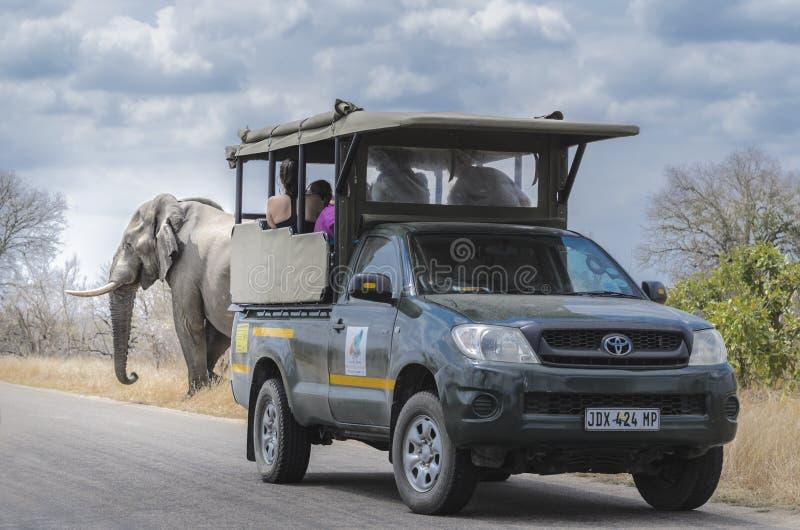 Elefante che macchia Safari South Africa immagini stock libere da diritti