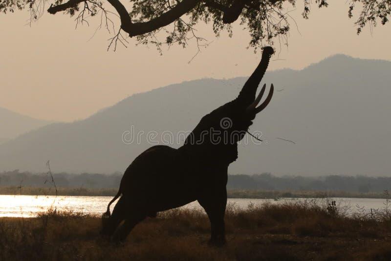 Elefante che vaga nel campeggio fotografia stock