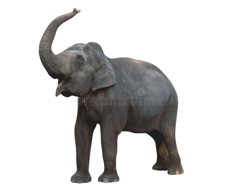 Elefante, clip-pathed fotos de archivo libres de regalías