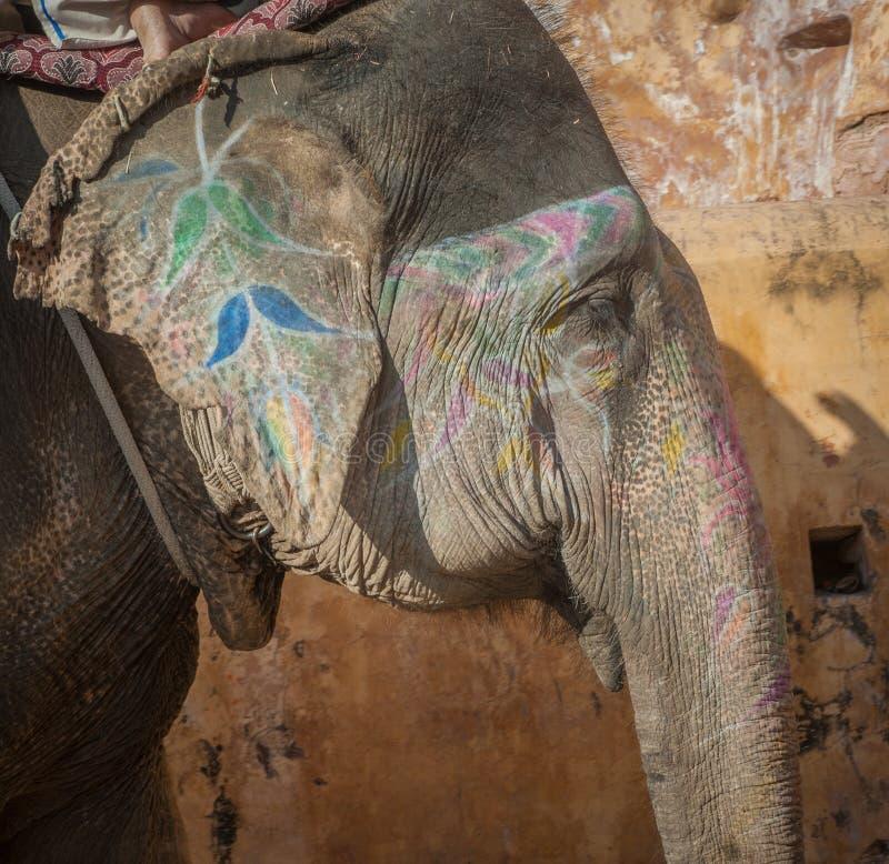 Elefante colorido en Jaipur, Rajasthán, la India foto de archivo