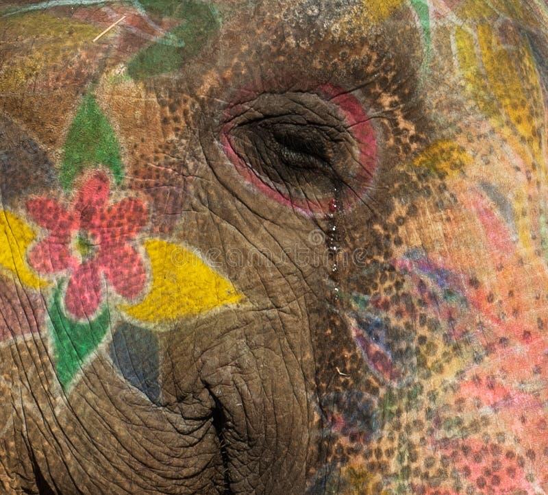 Elefante colorido en Jaipur, Rajasthán, la India fotos de archivo
