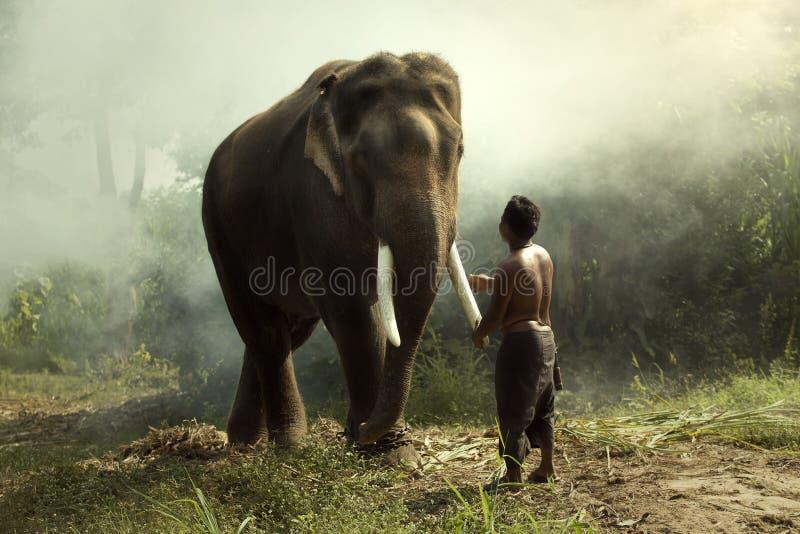 Elefante com mahout foto de stock royalty free
