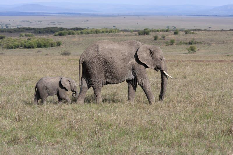 Elefante com o elefante do bebê que anda no savana africano em Amboseli imagem de stock