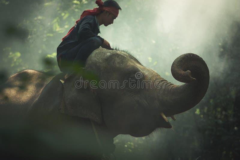 Elefante com o mahout nos animais selvagens imagens de stock