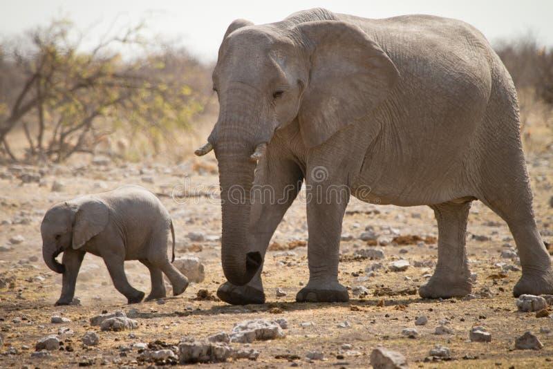 Elefante con il bambino fotografia stock