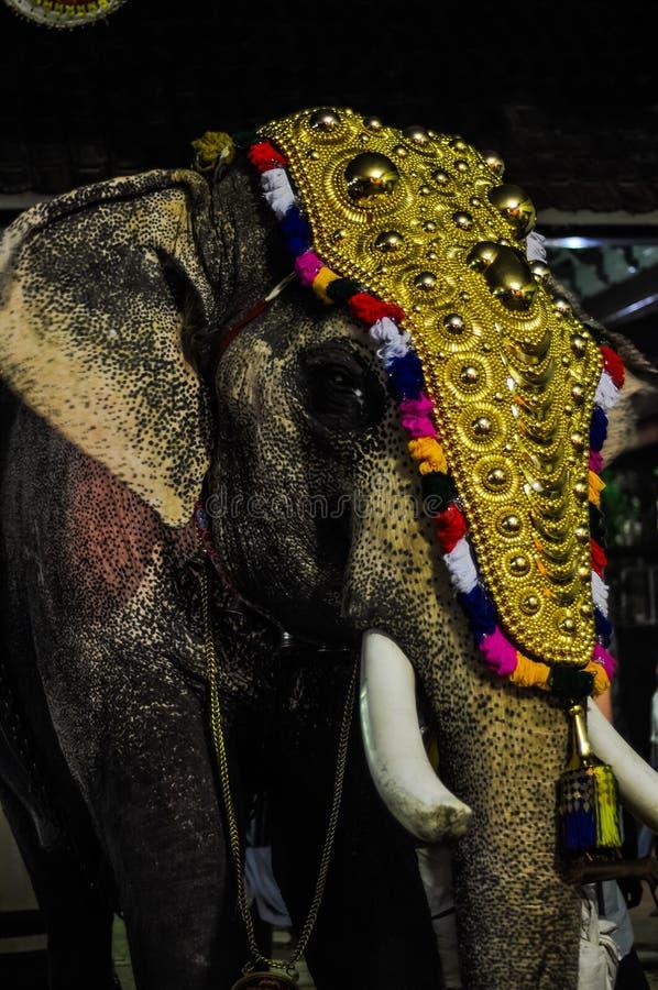 Elefante con la decorazione nel Kerala fotografia stock