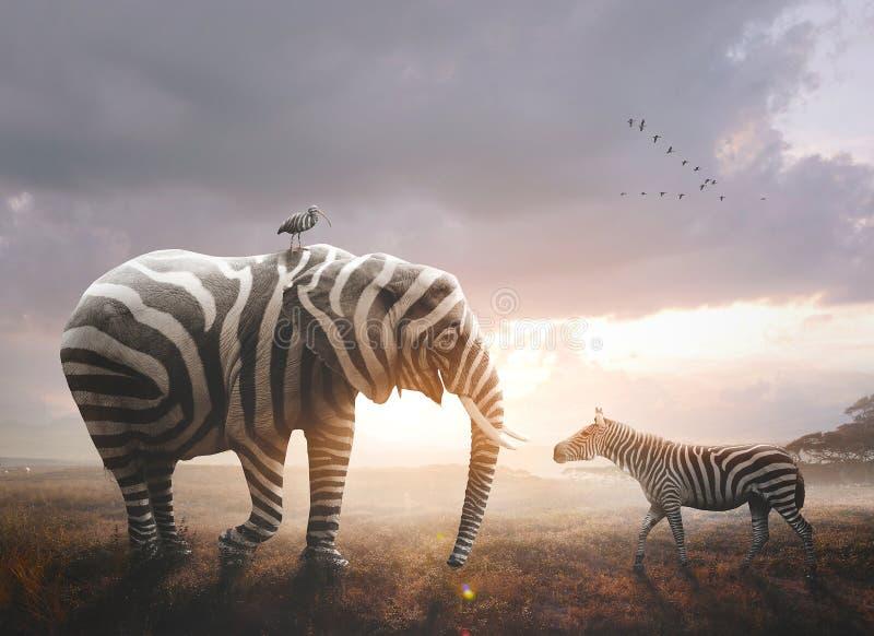 Elefante con las rayas de la cebra fotografía de archivo libre de regalías