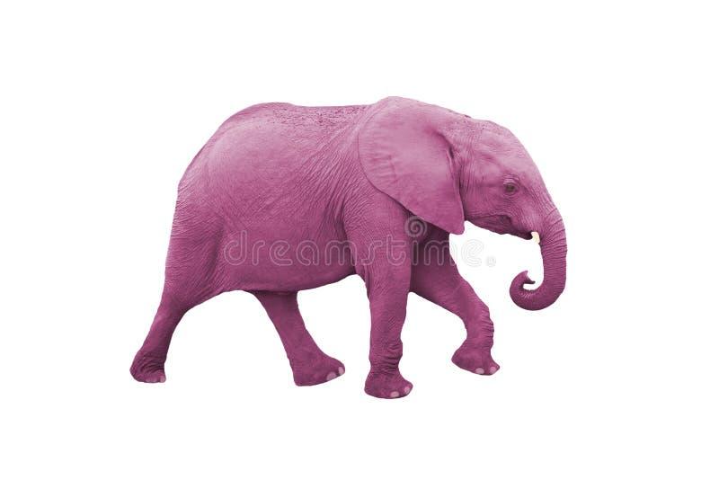 Elefante cor-de-rosa fotos de stock
