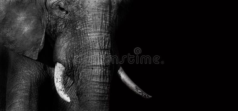 Elefante (criativo edite) imagens de stock royalty free