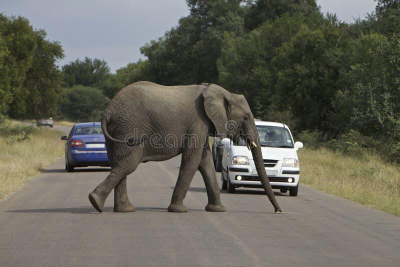 Elefante de Afircan foto de archivo