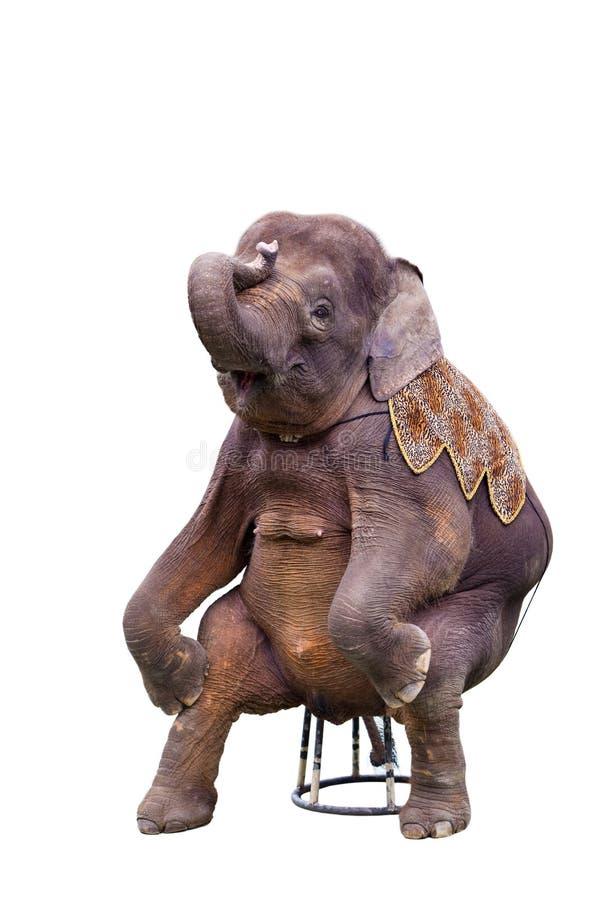 Elefante de assento fotografia de stock