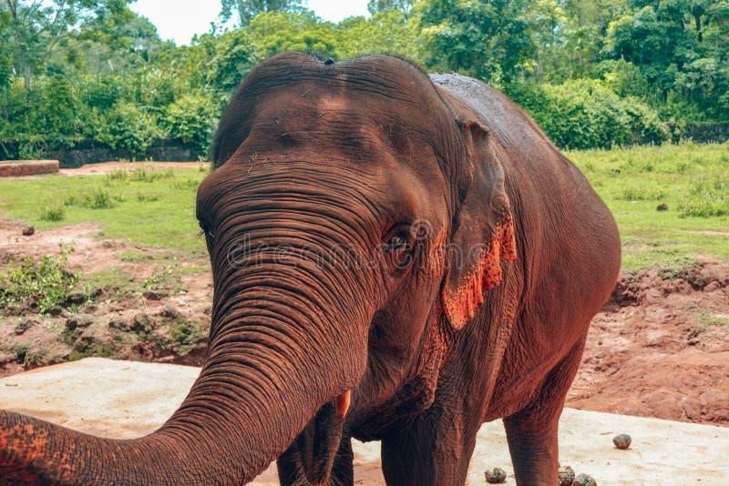 Elefante de Brown en el parque China del safari de Hainan foto de archivo libre de regalías