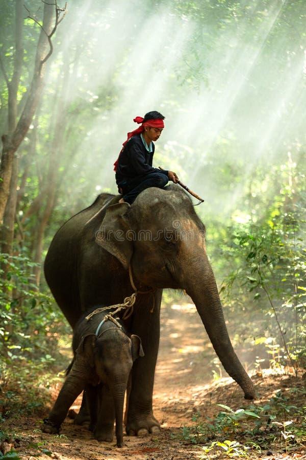 Elefante de la familia imagen de archivo