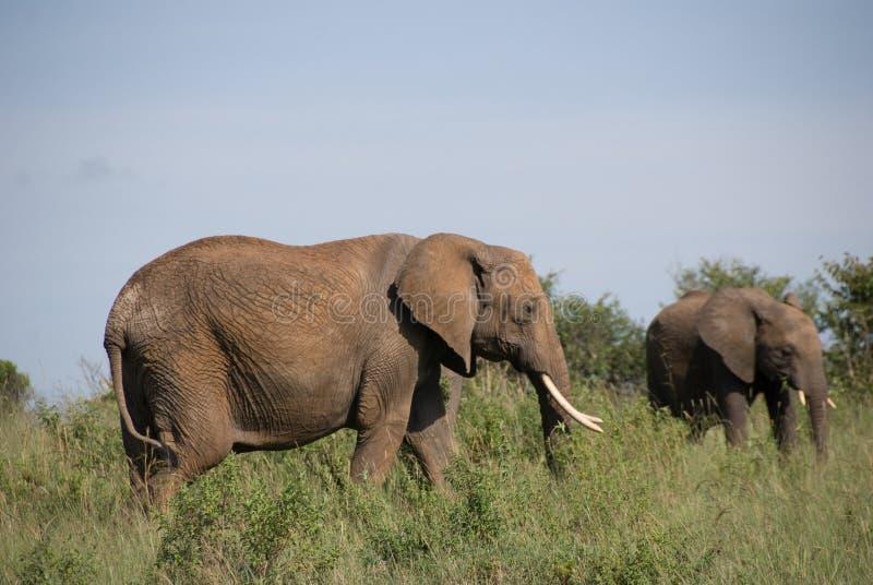 Elefante de la madre y del bebé foto de archivo libre de regalías
