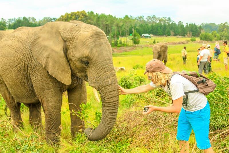 Elefante de los touchs del fotógrafo fotos de archivo libres de regalías