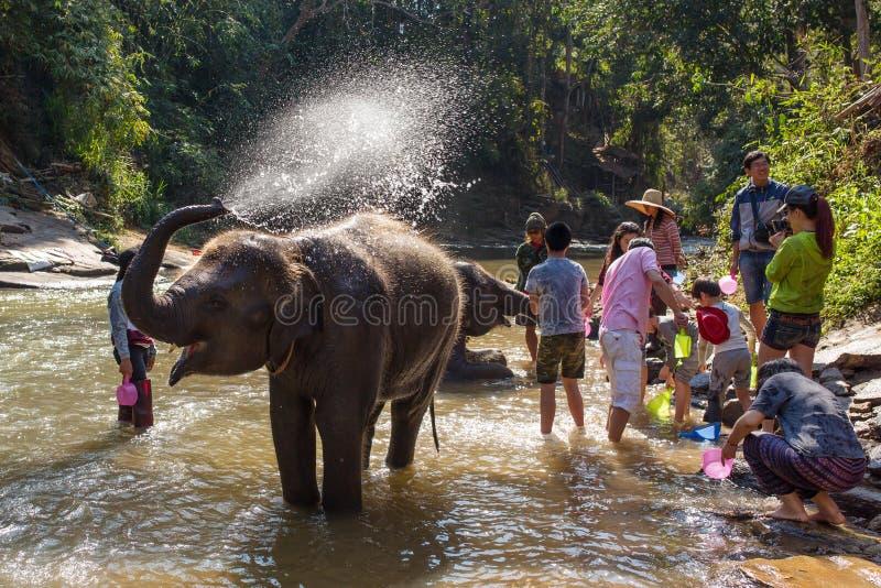 Elefante del bambino che bagna nel fiume vicino a Chiang Mai, Tailandia fotografia stock