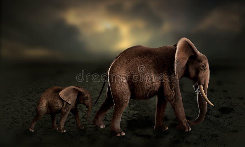 Elefante del bebé de los elefantes que camina en desierto ilustración del vector