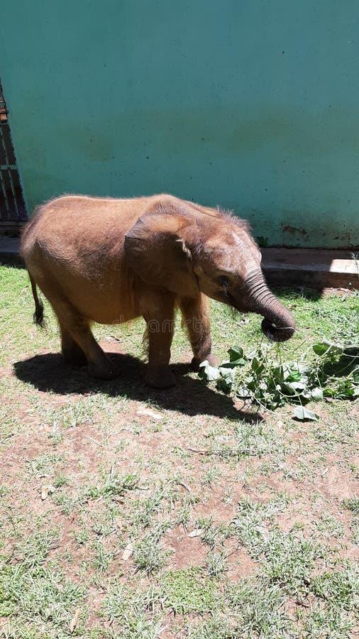 Elefante del beb? fotos de archivo libres de regalías