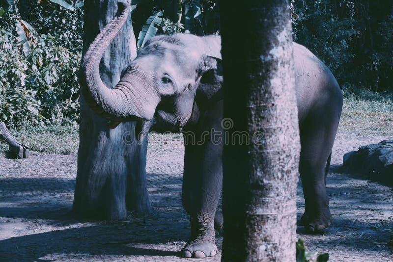 Elefante del beb? fotografía de archivo libre de regalías
