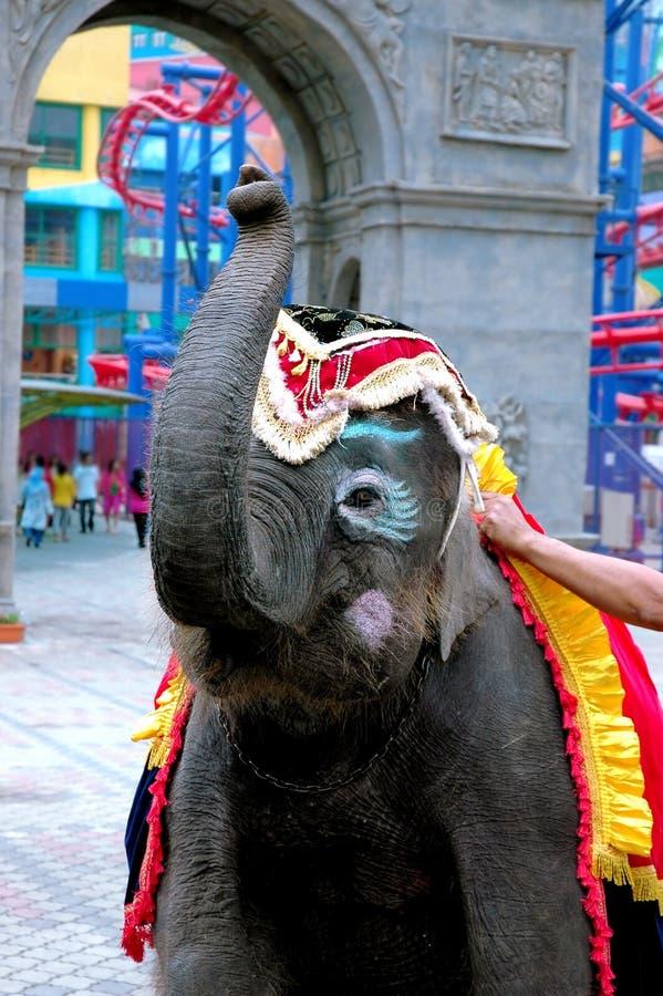 Elefante del pagliaccio fotografie stock libere da diritti