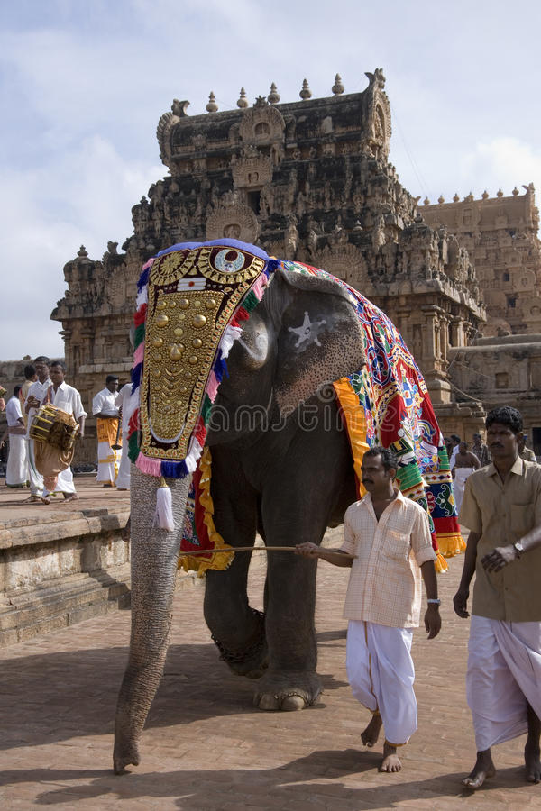 Elefante del tempiale - Thanjavur - India immagine stock