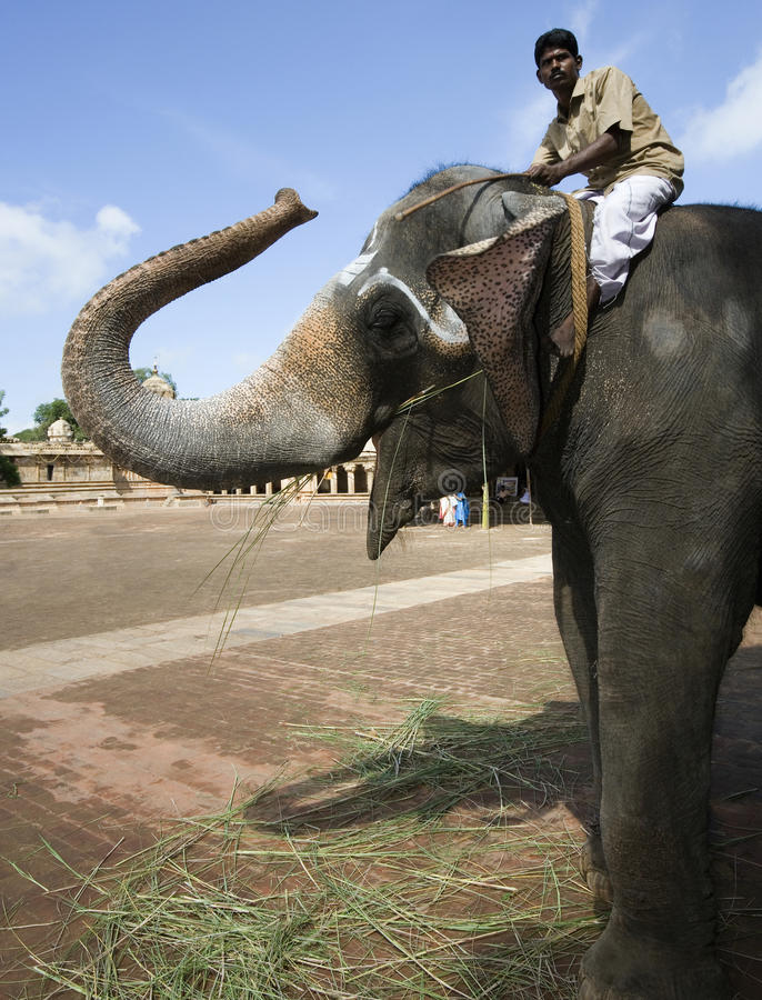 Elefante del templo - Thanjavur - la India imágenes de archivo libres de regalías
