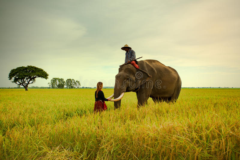 Elefante della famiglia su cereale archivato immagine stock