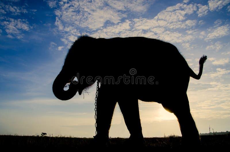 Elefante della siluetta fotografia stock libera da diritti