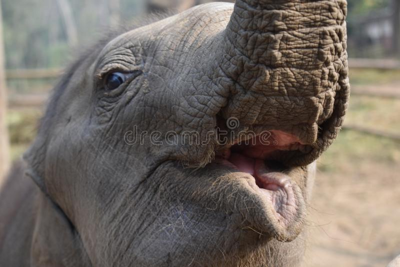 Elefante do beb? imagem de stock