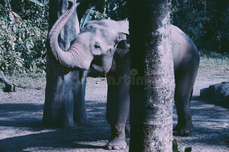 Elefante do beb? fotografia de stock royalty free