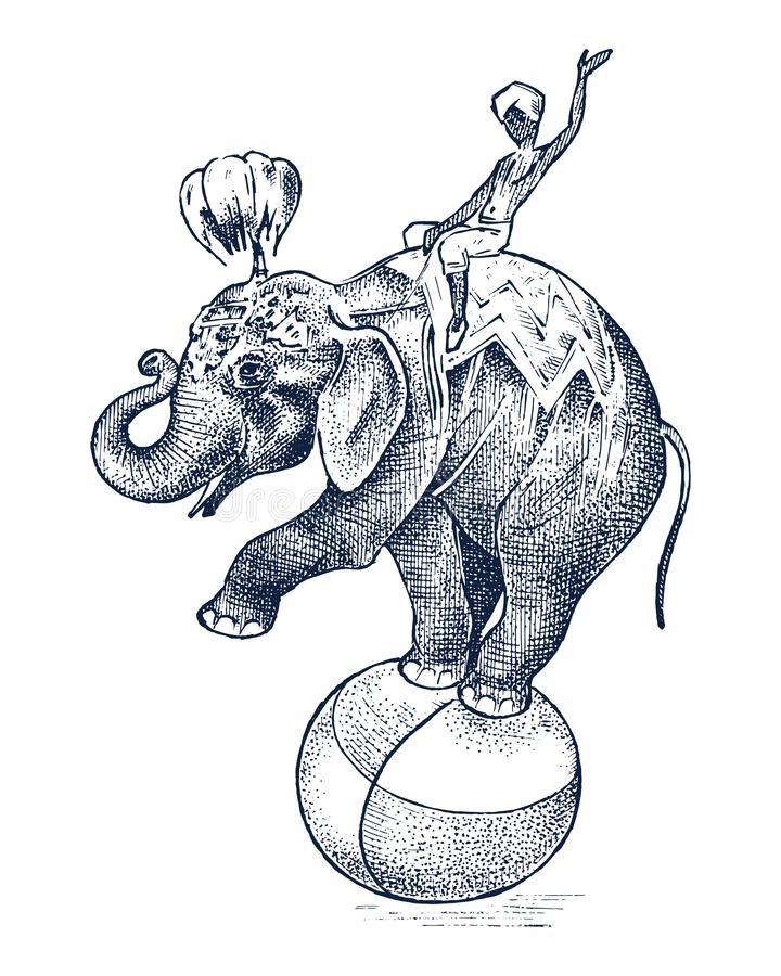 Elefante do circo Animal selvagem africano na bola Mostre no jardim zoológico mão gravada do esboço tirada no estilo do vintage ilustração stock